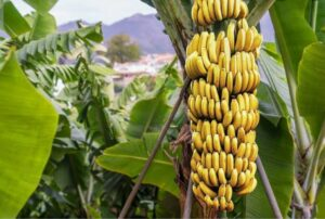 Potassium-Rich Foods to Add to Your Diet
